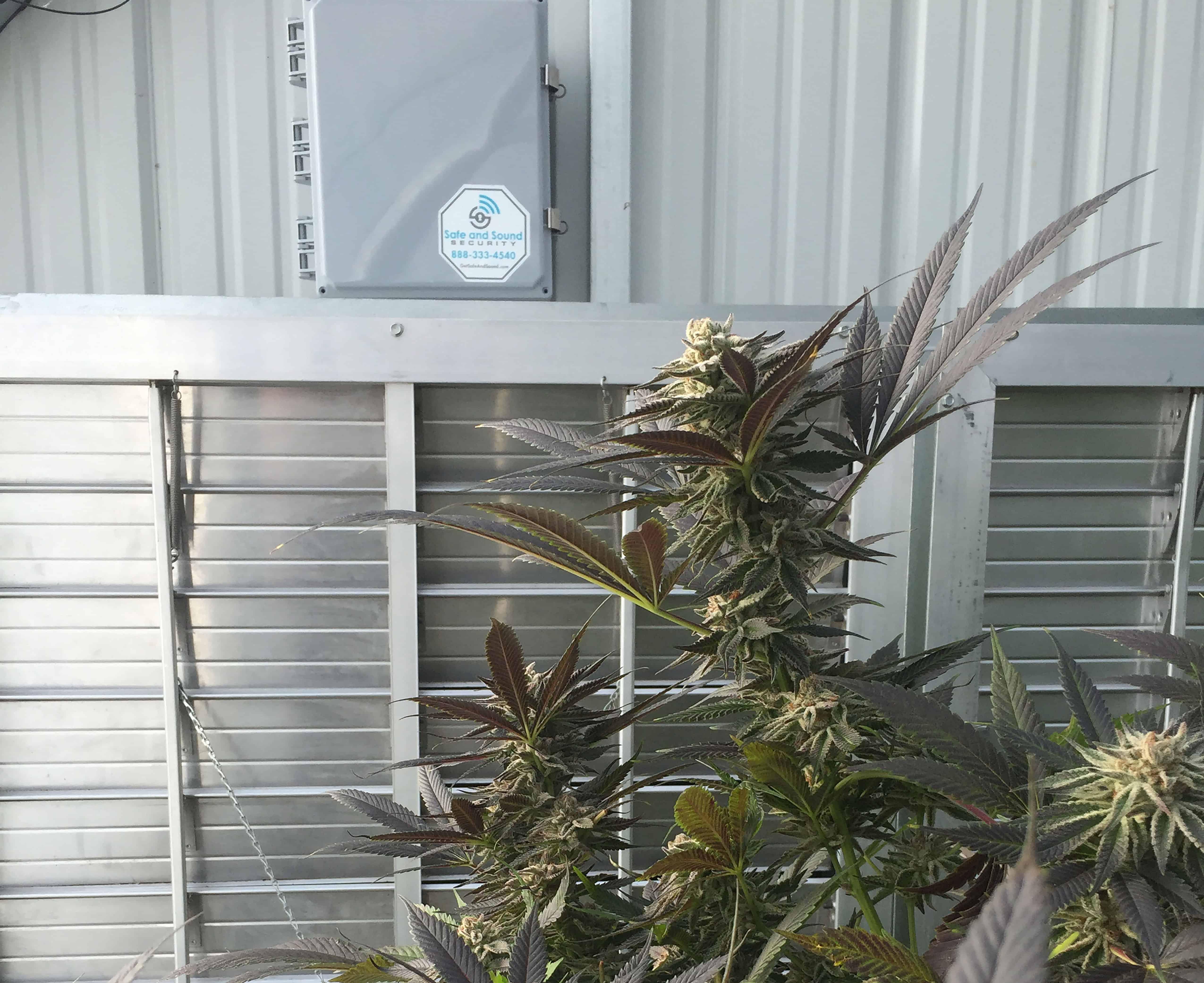Cannabis Security 2