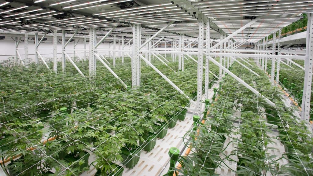 Cannabis security systems
