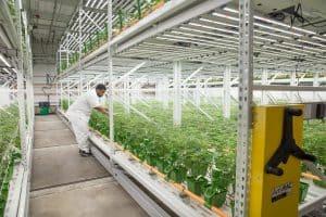 Cannabis grow facility security system installation