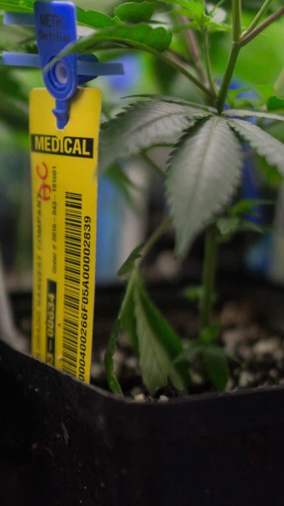 cannabis RFID Tracking and CCTV integration 1080x1920