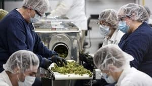 cannabis manufacturing facility security system
