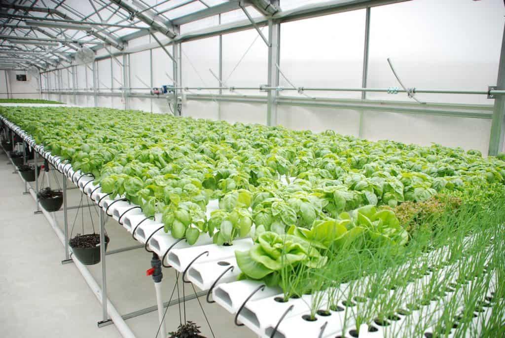 crops surveillance